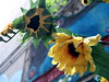 Birthday Flowers for Elizabeth Taylor (Mathias*) Tags: flowers macro berlin fake mitte lunchwalk myeverydaylife happybirthdaysteph