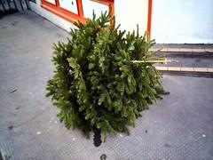 Christmas Tree on the Pavement
