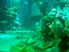 fish underwater disney