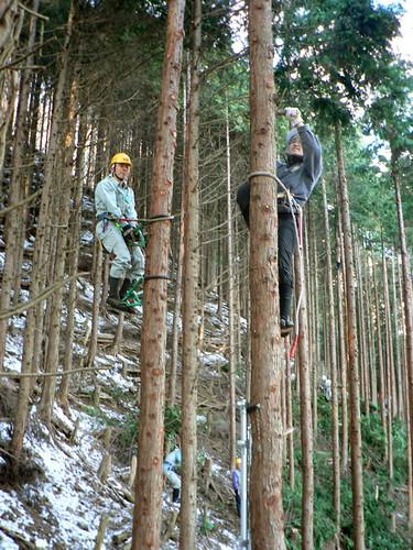 Climbing trees in Okutama