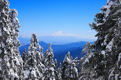 A Peek [ at the ] Peak (| HD |) Tags: california desktop trees windows wallpaper white mountain snow 20d nature oregon canon landscape mt photoshoot quality microsoft shasta vista hd darwish ashland hamad
