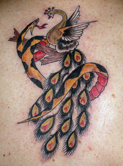 Closeup of Snake and Peacock Tattoo (Tattoo Tom) Tags: bird birds tattoo ink snake flash peacock oldschool tattoos fowl oldskool sailorjerry terrimorgan