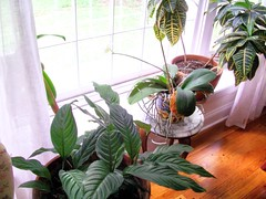 Houseplants help capture chemicals from the air.