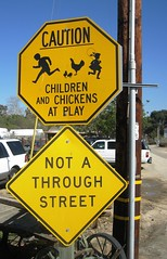 Chickens At Play - CAUTION (MR38.) Tags: chickens sign warning play