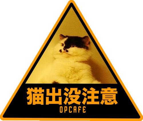 cat-show-off