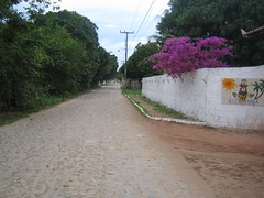 Escape route (Fe em Brasil) Tags: road flowers trees brazil wall brasil sand fortaleza 50s cobbles sitio 2007 escaperoute vogonpoetry suviscamera waitingtojoin