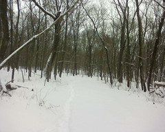 A view of the Allerton Schroth trail