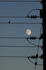 Singing to the moon (Mark Rutter) Tags: moon bird silhouette all singing powerlines f5 i20 i120 markrutter