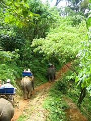 Слоны уходят в даль.