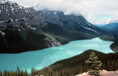 Peyto Lake (Stephen P. Johnson) Tags: park mountain lake canada wow rockies velvia national alberta scanned banff specnature myexplore flickrplatinum
