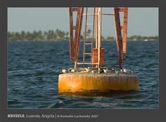 _KDL4074 (AIB - Angola Image Bank por KODILU Fotografia) Tags: ocean sea topf25 topv111 mar topf50 topv555 topv333 topv1111 angola luanda mangrooves mussulo mangais angolaemfotos angolaimagebank kodiluphotography angolainphotos wwwangolaimagebankcom