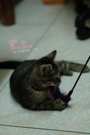 外婆家養的貓,名字叫做 BuBu