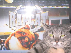 Rap Cat Sabine