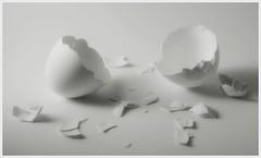 shells redux (Darny) Tags: blackandwhite empty egg eggs whiteonwhite lightbox eggshell impressedbeauty darny