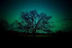 evening tree - by gari.baldi