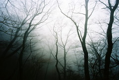 forest idea (troutfactory) Tags: trees mist film silhouette japan fog mystery forest voigtlander rangefinder wideangle analogue 15mm bessal wakayama kongo thewoods kongosan mountkongo treeforms imhavingadreamofthetrees forestidea