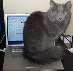 My New MacBook Pro with a Cat