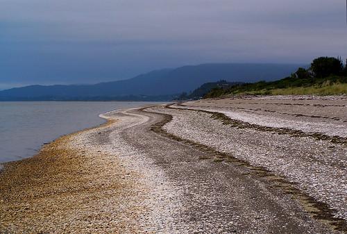 Golden Bay shells
