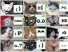 Fotos de gestos con gatos (isc_luis_herrera) Tags: smile face cat icons faces cry omg iconos