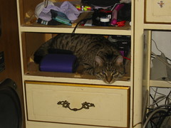 20060506 - Misc Misfit - 100-0010 - Close-up of Misfit laying inside my drawer amongst all that clutter (by ClintJCL)
