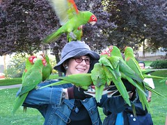 Woman with the Wild Parrots (joeysplanting) Tags: san francisco parrots conure ferrypark wildparrotsoftelegraphhill redmaskedconure aratingaerythrogenys aratingidae joanneca2007