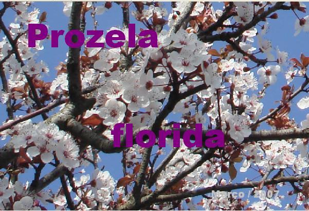 árvore flor - Prozela.bmp- red e escrita