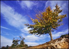 Sky Bent!! (adrians_art) Tags: blue autumn trees england sky plants green film nature tag3 taggedout clouds geotagged landscapes kent tag2 fuji tag1 seasons parks scanned slides sevenoaks knowle naturesfinest geotags abigfave