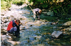 gold panning (mm-j) Tags: camping 2002 summer film june wales river 50mm gold archive scan estuary nikkormat barmouth northwales goldpanning