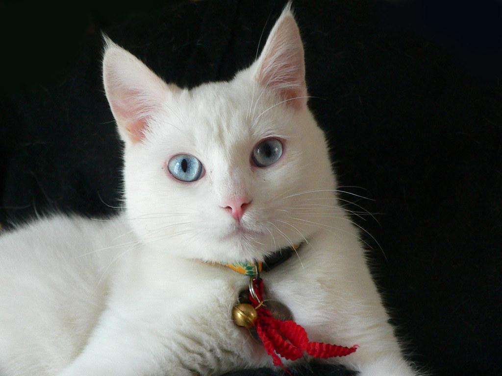 Представьте себе, что вы фотографируете чёрного кота на белом фоне