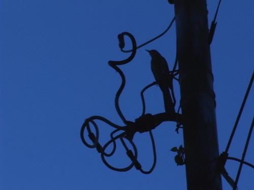 morning_bird