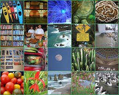 Today is my One-Year Flickrversary! (bluemarla) Tags: fdsflickrtoys mosaic flickrversary bluemarla