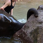 Green Hill Valley Elephant Camp bei Kalaw
