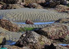 MinusTideSandPatterns (mcshots) Tags: usa california socal losangelescounty coast beach lowtide tidepools sealife kelp eelgrass plants seaweed rocks reef ocean sea sand nature travel stock mcshots