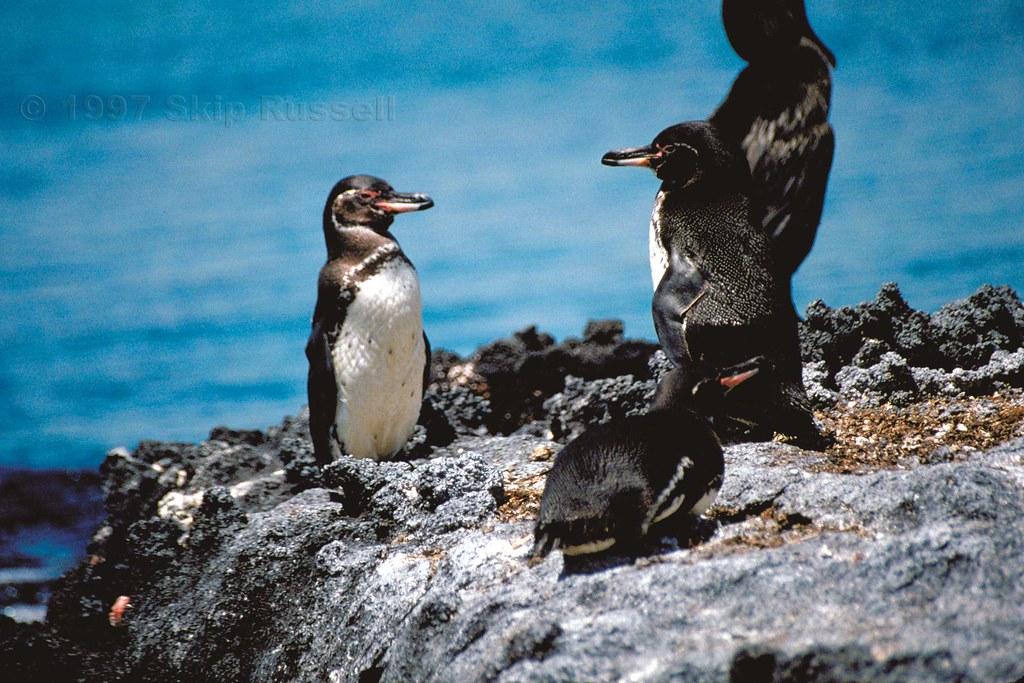 Hermosas imagenes de Galapagos, Ecuador