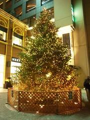 クリスマスツリー(桜木町)