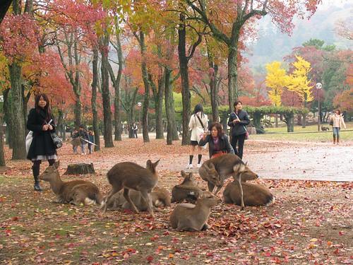 古都奈良 一幅人文与自然的和谐画卷 - 路人@行者