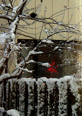 December last year (Per Ola Wiberg ~ powi) Tags: 2005 snow beautiful fence wow star december sweden excellent abc sverige sn blackbird staket photohobby eker adventsstjrna wrangels koltrast diamondstars flickrestrellas grupodehablahispana grouptripod brilliantphotography hellofriend