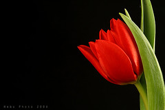 "Happy Eid ,,,, :"") (Heba AL-Jadaan (Heba _ photo)) Tags: flowers light red flower green home nature rose canon happy friend soft heart feel eid fresh tulip kuwait q8 heba myheart impressedbeauty frhwofavs"