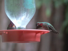 Sharing of the feeder