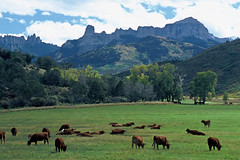 Cattle Ranch on Owl Creek Pass Road: Near Ridgway, Colorado (CO) (Floyd Muad'Dib) Tags: ranch chimney usa mountain mountains rock america creek geotagged cow us colorado unitedstates cattle cows united north pass peak southern co northamerica courthouse states peaks sanjuans americanwest chimneyrock courthouserock olw ranches westernusa owlcreek southerncolorado sanjuanrange coloradoranch ridgwaycolorado owlcreekpass ridgewaycolorado ridgwayco ridgewayco coloradoscenicdrives