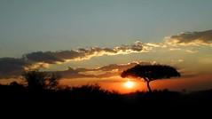 sunset and acacia - by angela7dreams