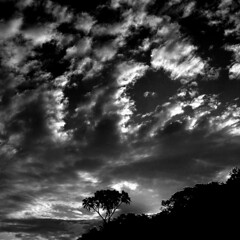 Solitary Palm & Sky (jay_kilifi) Tags: sky white monochrome creek kenya blackand kilifi