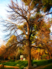 waiting for spring miracle (cmedrang) Tags: park parque winter 15fav tree arbol estanque invierno retiro orton parquedelbuenretiro explore03jan06 interestingness330 i500