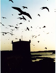 Essaouira (lostartist) Tags: travel sunset birds coast interestingness gulls explore morocco maroc essaouira interestingness135 i500 abigfave
