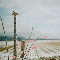 (chillhiro) Tags: snow flower 120 film grave japan mediumformat squareformat backcountry expired 66 ptsixtl