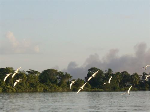 Aves en el Delta del Orinoco