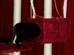Ostrich 1 (sags29) Tags: red black cat toys play ostrich velour scratchingpost notmycat