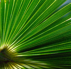 Green palm fronds macro - by Vanessa Pike-Russell