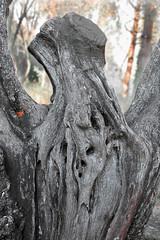 tors de tronc - by desdibuix - miquel