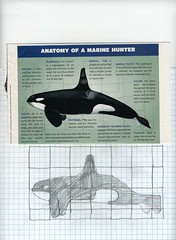 drawing real animals whale